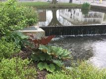 Water Gardens Weir and Fish Pass